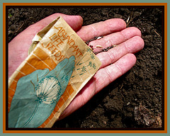 First Seeds Planted by Pictoscribe - Home again @Flickr